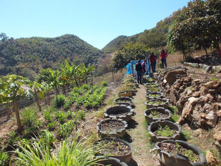 Jardins potagers for Creation jardin potager